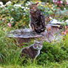 Cats in the Dog-Path Garden