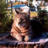Tree Stump Garden Cat