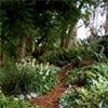Wattle Woods Garden Paths