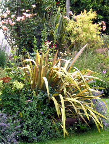 New Zealand natives look great in mixed plantings.