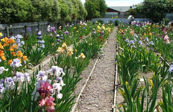Gardening lists for Irish garden designs