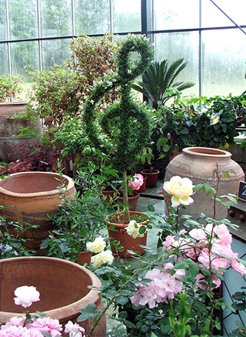 Like pots, or topiary, as displayed in this Brussels nursery.
