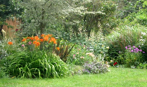 A happy clump of species daylilies growing in the Elm tree garden.