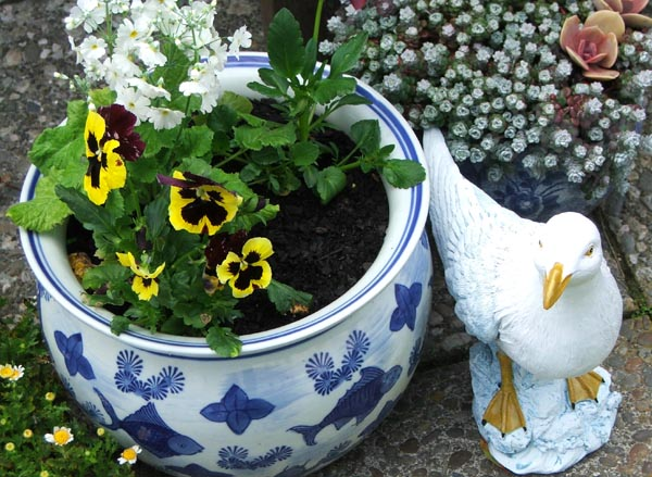 Seagulls, pots, and little flowers.