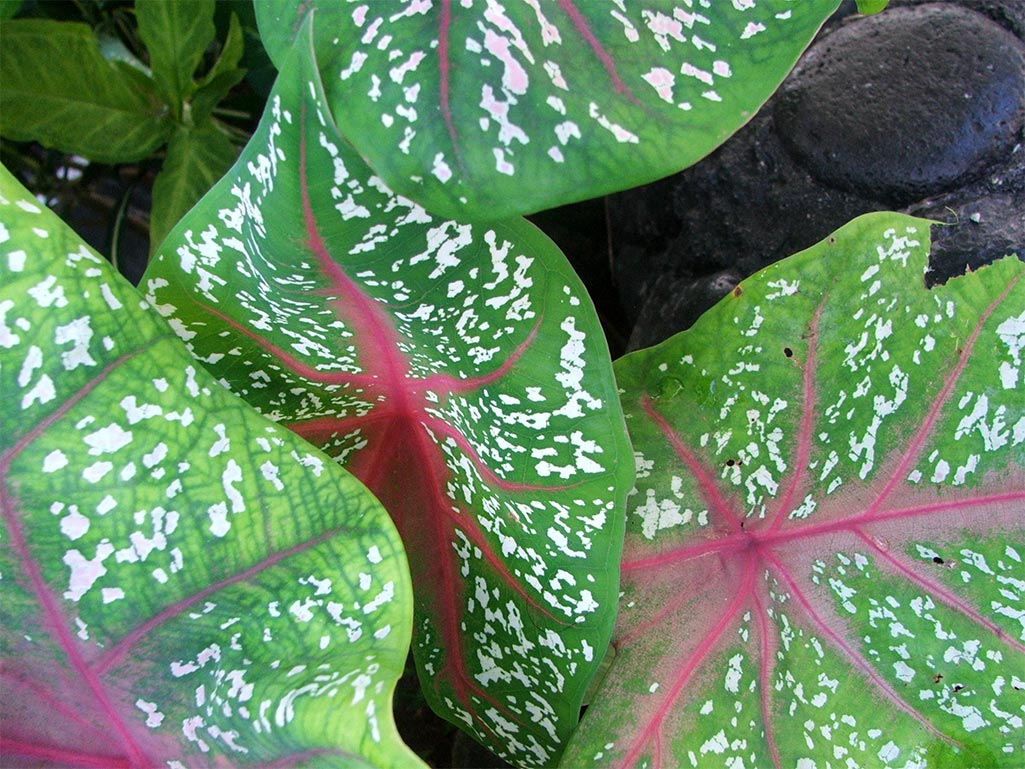 Gardens of savaii for Garden plants names and pictures