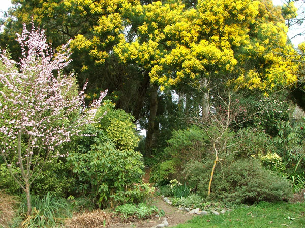 The Wattle trees are winter-flowering.