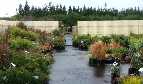 This is one of the local nurseries I visit.