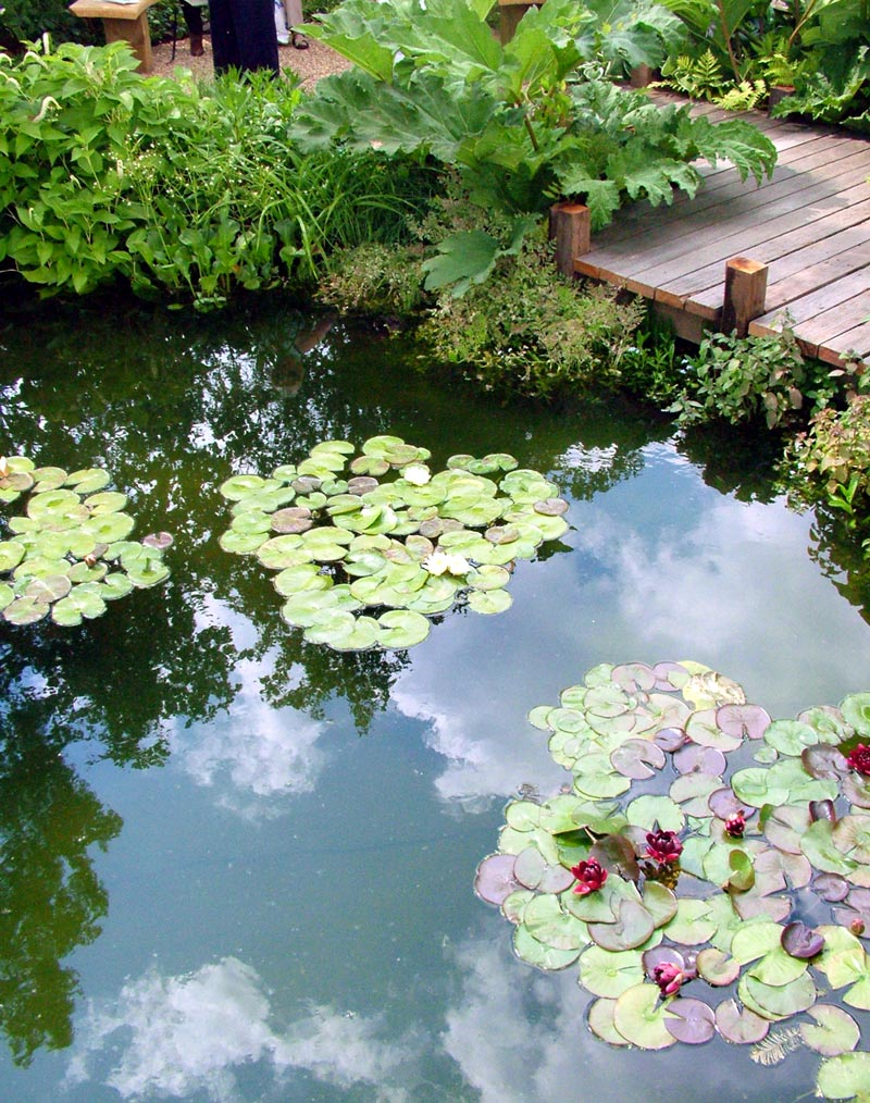 water lily pond decking Secretions for better planning of water area in your landscaping garden