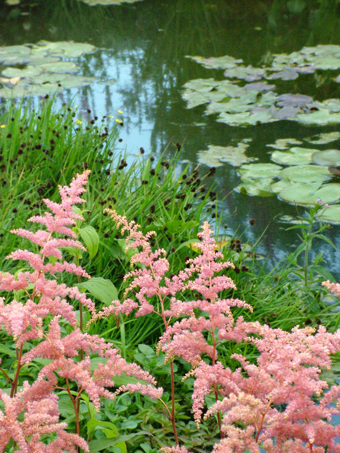 Hampton court flower show picture gallery 2 for Plants for around garden ponds