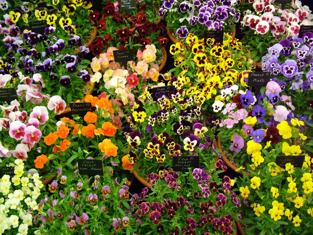 Hampton Court Flower Show Picture Gallery 4