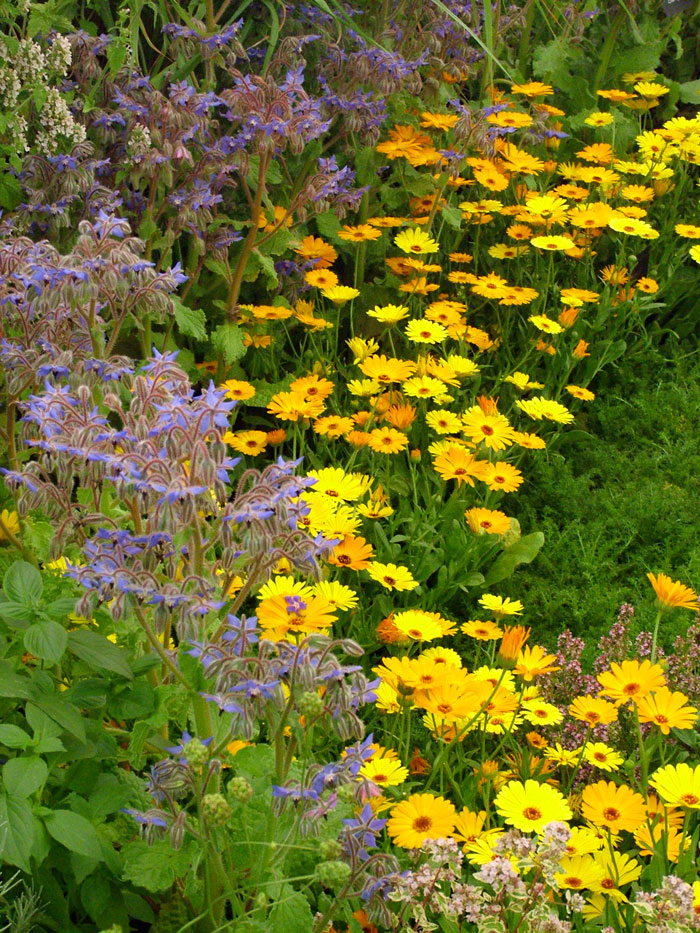 Hampton Court Flower Show Picture Gallery 3
