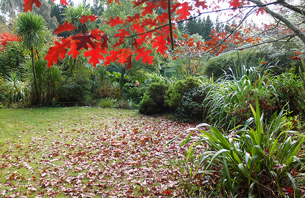 The fallen leaves from one of the Oak trees have been left on the lawn.