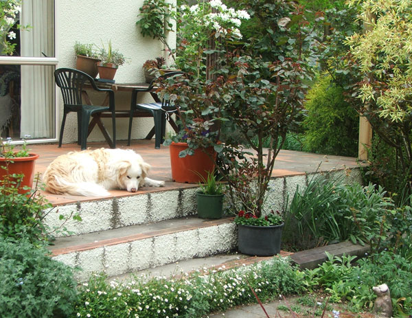 Rusty The Dog Is Waiting For Some Spring Gardening Action.