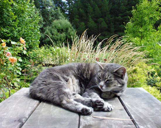 Garden Table Cat
