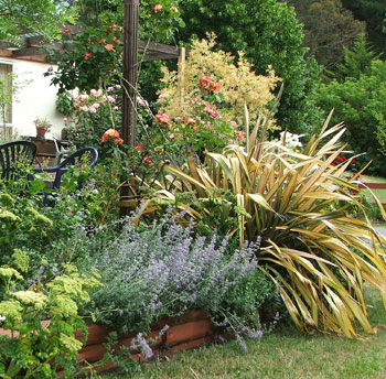 Angelica, Catmint, and a cream Phormium.
