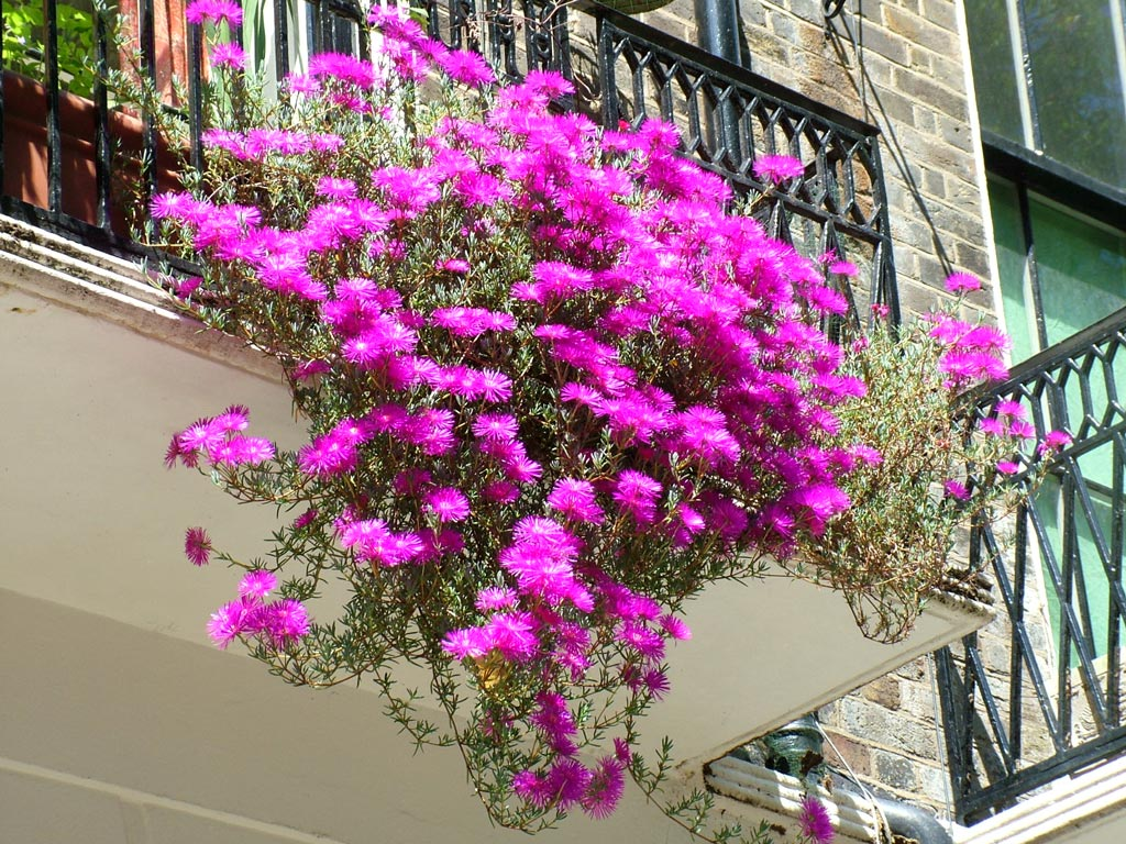 Top ideas to decorate your balcony garden with creepers & cl.