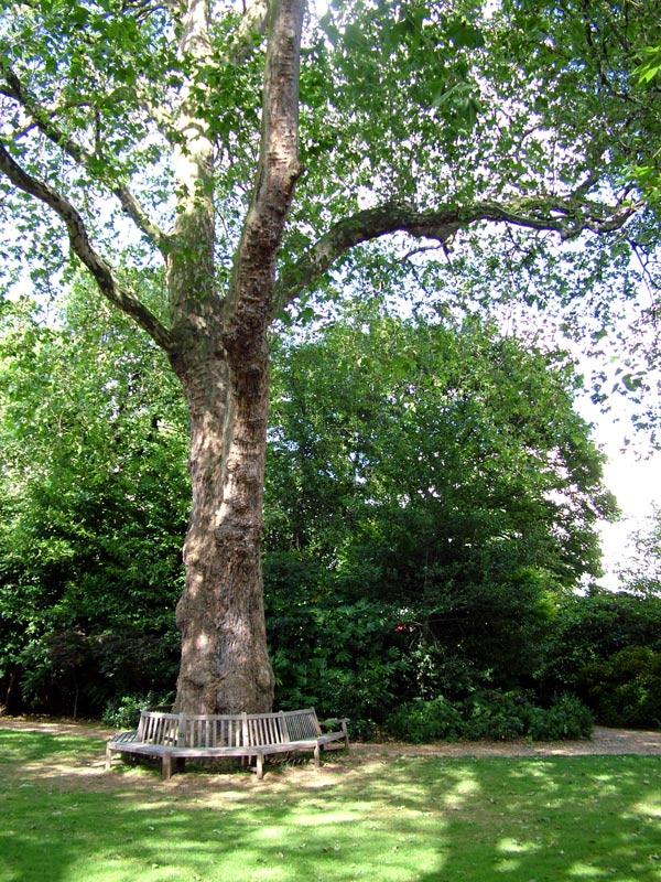 Belgravia gardens for Garden trees london
