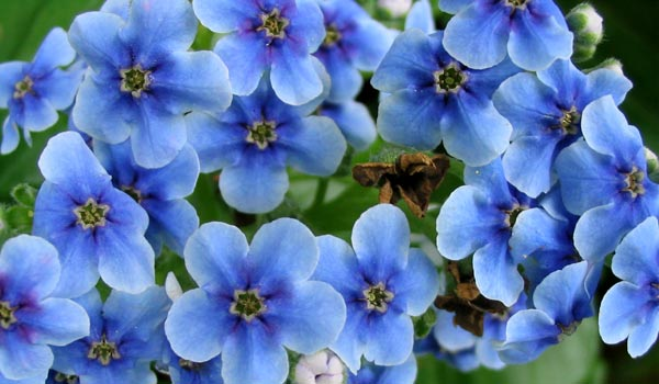 Blue and white flowers.
