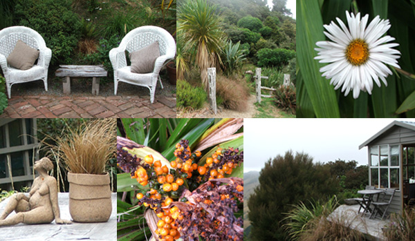 Cordylines, Astelia berries, Celmisia Daisies, and cute cane chairs...