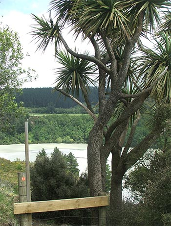 Yet another photograph of this New zealand tree.