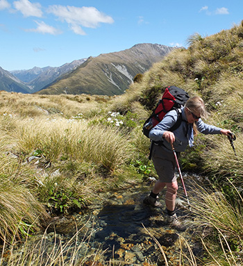 On the tussock tops.