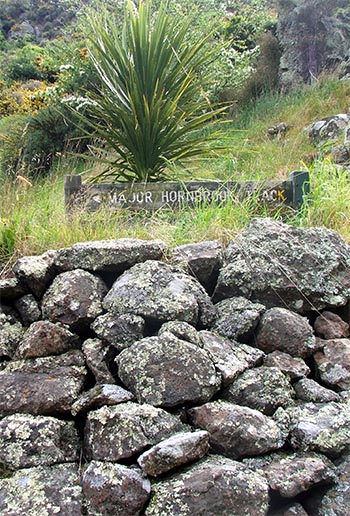 A juvenile cordyline grows above this small patch of volcanic rock wall.
