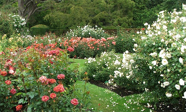 Rose Garden | 600 x 361 · 89 kB · jpeg