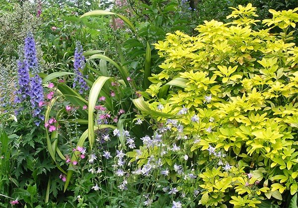 With summer perennials.
